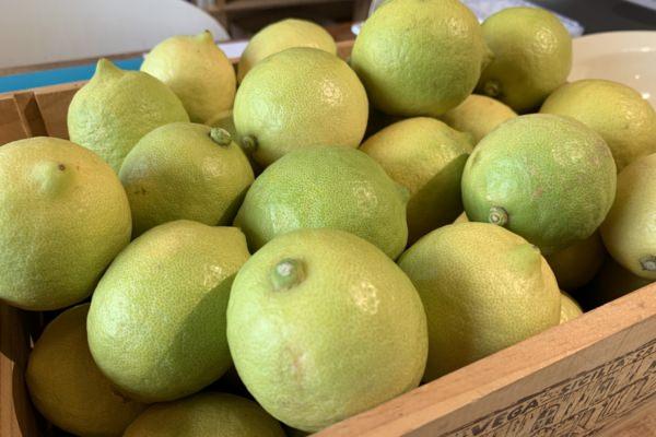 季節の手仕事ワークショップ「グリーンレモン胡椒」